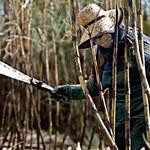 859 dni wędrówki wzdłuż Amazonki