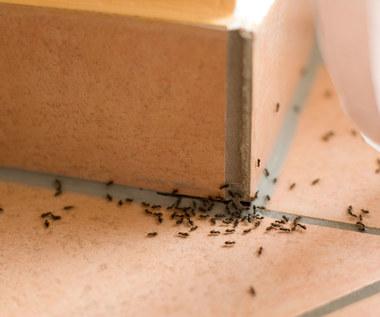 9 naturalnych środków odstraszających owady