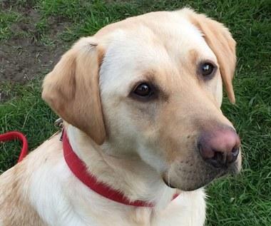 9 wskazówek, które ułatwią życie właścicielowi psa