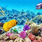 99 proc. koralowców z Wielkiej Rafy Koralowej może do 2025 roku zniknąć