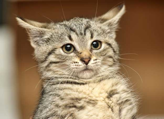 A ty rozumiesz swojego kota? /123RF/PICSEL
