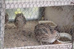 A w koszyku jaja... przepiórki, gołębia i strusia