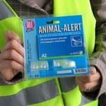 A2: Kierowcy gwiżdżą na zwierzęta
