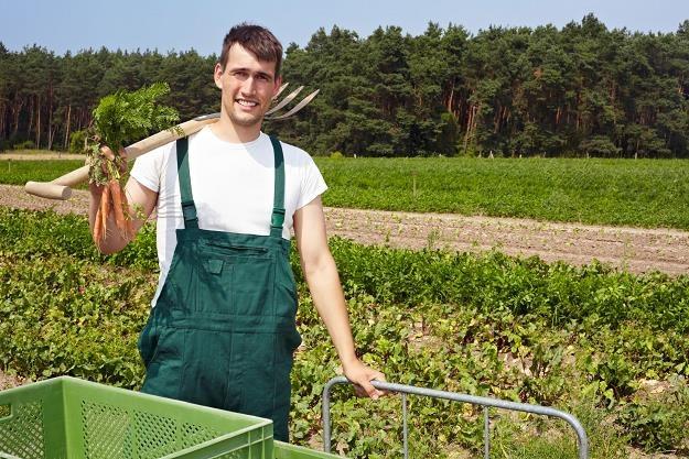 Aby móc uzyskać dotacje, trzeba mieć też odpowiednie wykształcenie rolnicze /©123RF/PICSEL