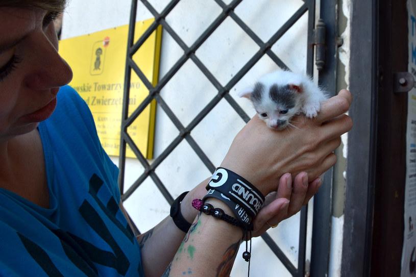 Aby pomóc KTOZ, można przekazać 1 proc. podatku na zwierzęta będące pod ich opieką /Ewa Majewska