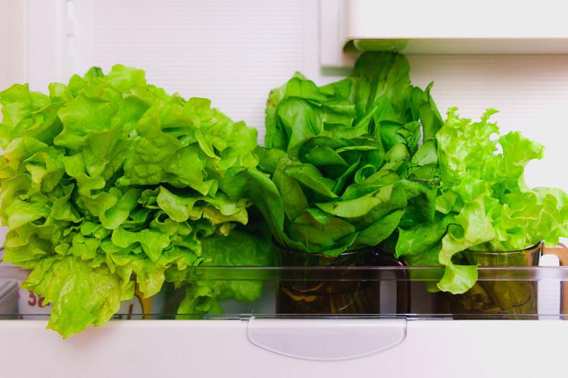 Aby sałata zachowała jędrność, przechowujmy ją w lodówce zawiniętą w ręcznik papierowy. Mrożenie powoduje,  że traci konsystencje /123RF/PICSEL