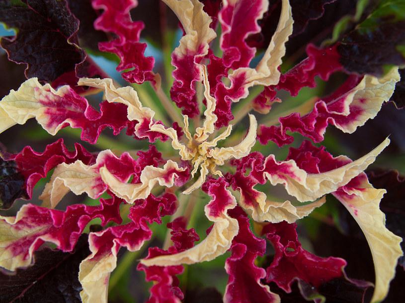 Aby stworzyć  roślinną kompozycję, trzeba  powiesić na ścianie kilka doniczek  z pnączami. /123RF/PICSEL