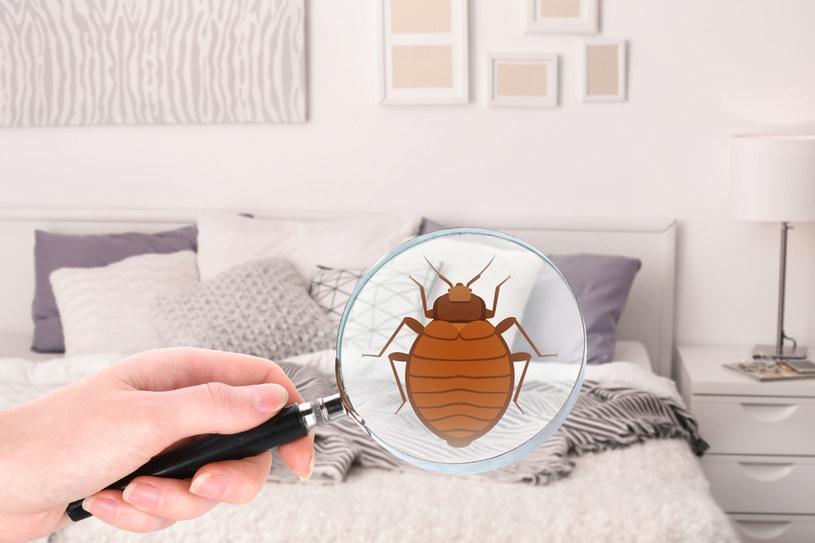 Aby uchronić się przed alergią, pozbądź się roztoczy /123RF/PICSEL