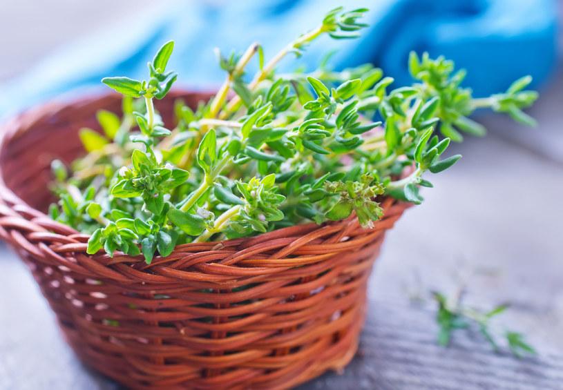 Aby zaparzyć leczniczą herbatę, potrzebne będą dwie łodygi świeżego tymianku, pół litra wrzątku i 15 minut na naciąganie /123RF/PICSEL