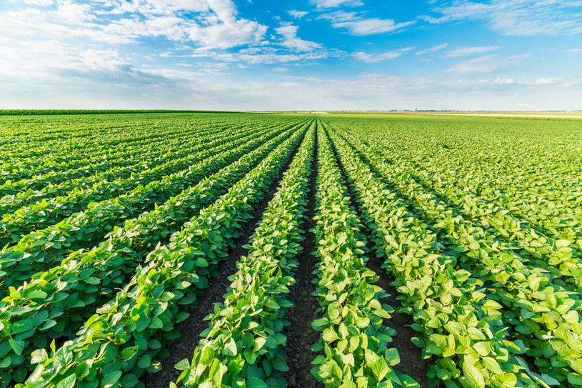 Aby zwiększyć plony, często stosuje się pestycydy /123RF/PICSEL