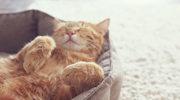 Adoptowała chorego kota. Zobacz, jak jej się odwdzięczył