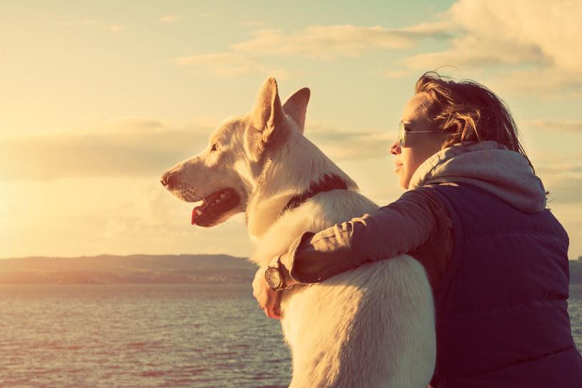 Adoptując psa, dopasuj go do swojego charakteru /123/RF PICSEL /123RF/PICSEL
