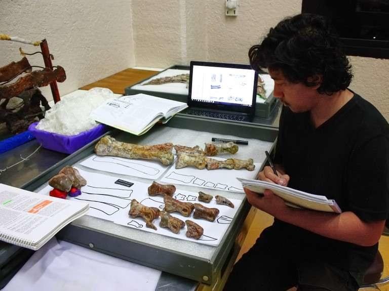 Adun Samathi podczas analiz kości /materiały prasowe