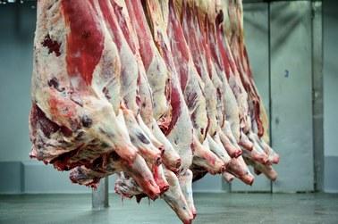 Afera z mięsem chorych krów. Co będą badać unijni inspektorzy?