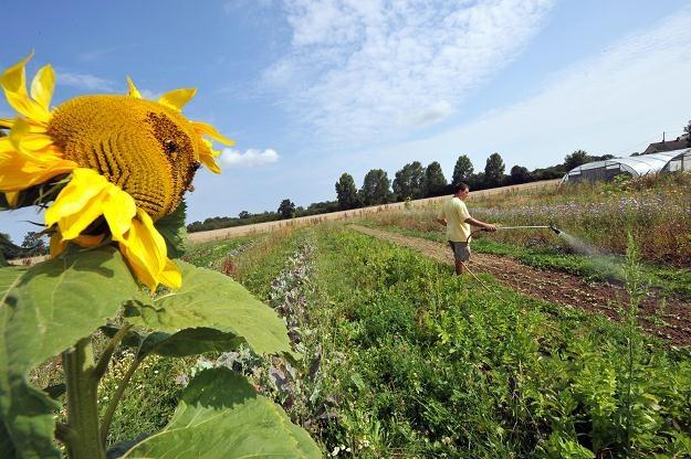 Agencja Nieruchomości Rolnych ma do sprzedaży 300 tys. ha ziemi /AFP