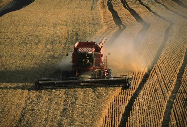 Agencji Rynku Rolnego oszacowała nasze zbiory /© Panthermedia
