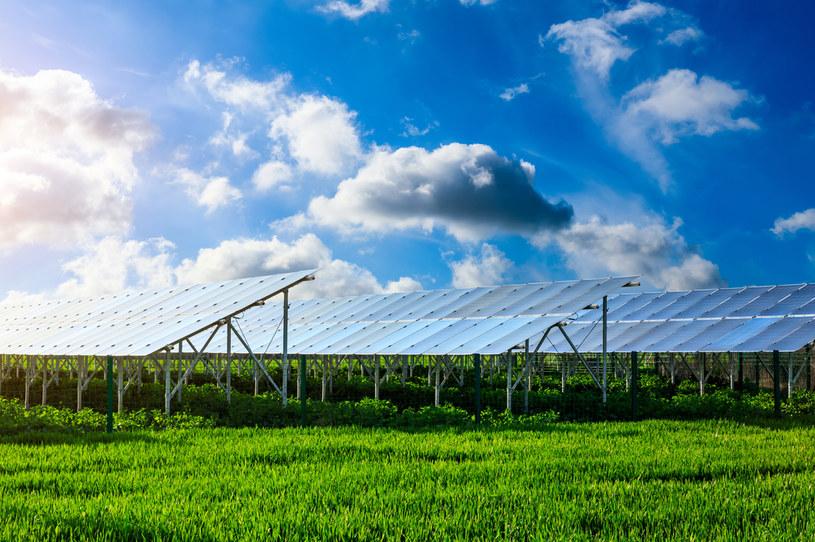 Agrowoltaika to połączenie rolnictwa i uprawy roślin oraz hodowli zwierząt z produkcją energii ze słońca /123RF/PICSEL