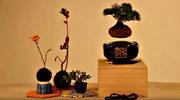Air Bonsai: Nie ma fajniejszego gadżetu od lewitującej rośliny