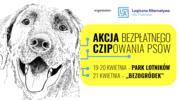 Akcja bezpłatnego czipowania psów