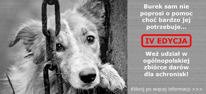 "Akcja ""Burek sam nie poprosi o pomoc"" /INTERIA.PL"