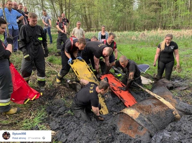 Akcja bytomskich strażaków /facebook.com