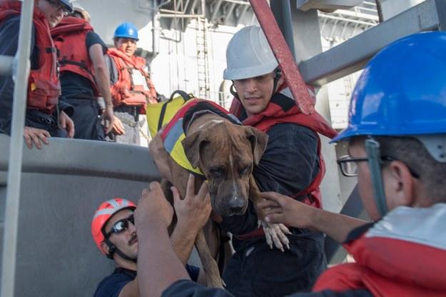 Akcja ratunkowa /Mass Communication Specialist 3rd Class Jonathan Clay / US Navy  /PAP/EPA