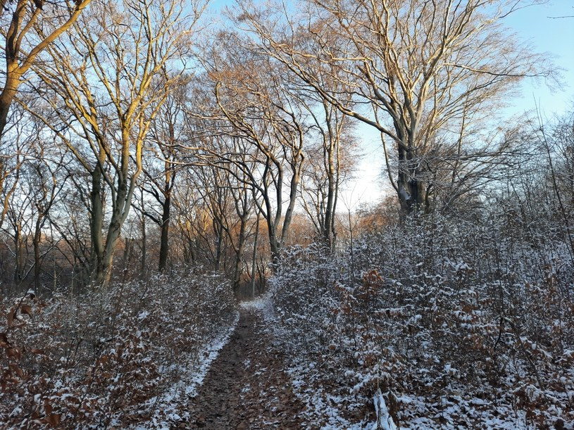 Aktywiści chcą, by na terenie lasu utworzyć rezerwat /archiwum prywatne