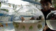 Akwarium dla leniuchów