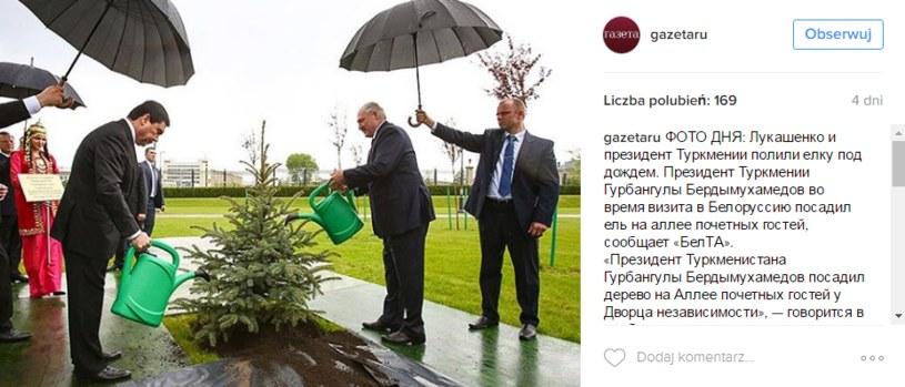 Alaksandr Łukaszenka podlewa jodłę /instagram.com/gazetaru /