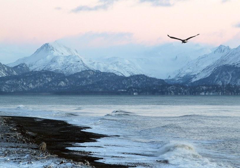 Alaska (zdjęcie ilustracyjne) /123RF/PICSEL