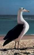 Albatros /Encyklopedia Internautica