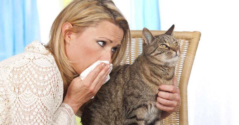alergia na kota /© Photogenica