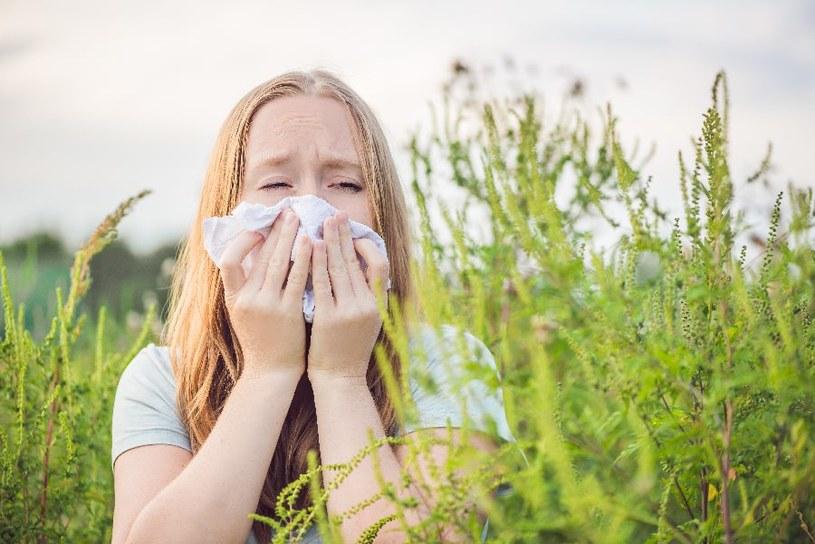 Alergia na pyłki jest bardzo uciążliwa /123RF/PICSEL