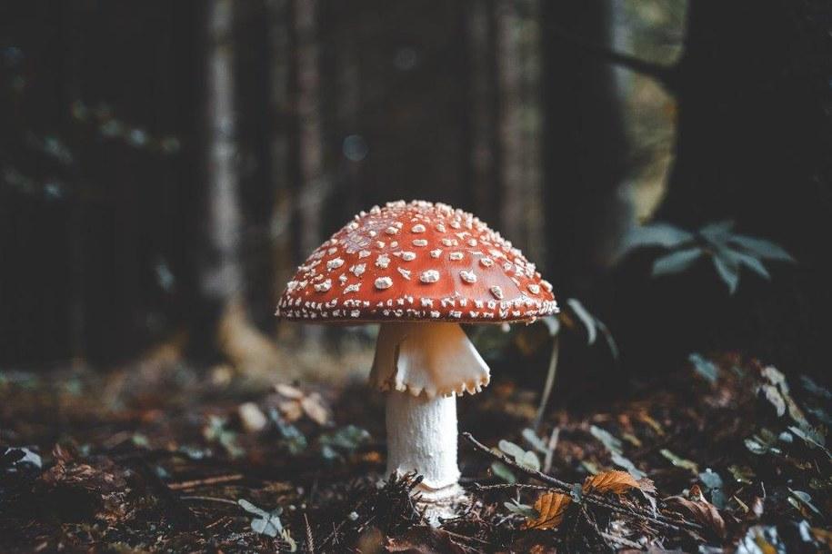 Alergia na zarodniki grzybów /Materiały prasowe