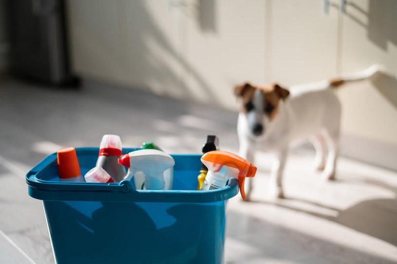 Alergia u psa może być wywołana chemicznymi środkami czystości /123RF/PICSEL