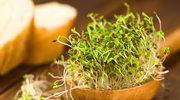 Alfalfa wraca do łask