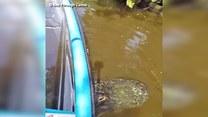 Aligator utknął pod kajakiem. Przerażające!