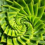 Aloes: Dlaczego warto mieć go w domu?