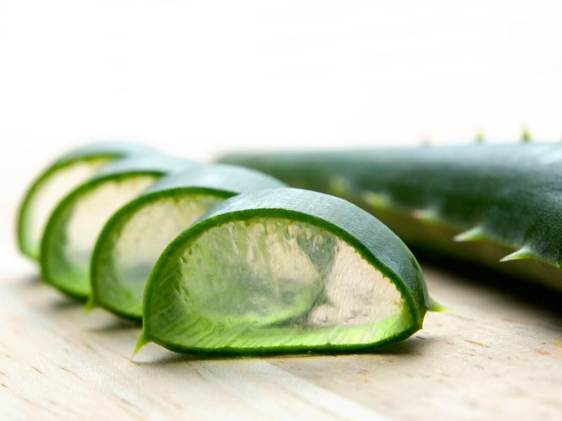 Aloes działa kojąco i nawilża skórę /123RF/PICSEL