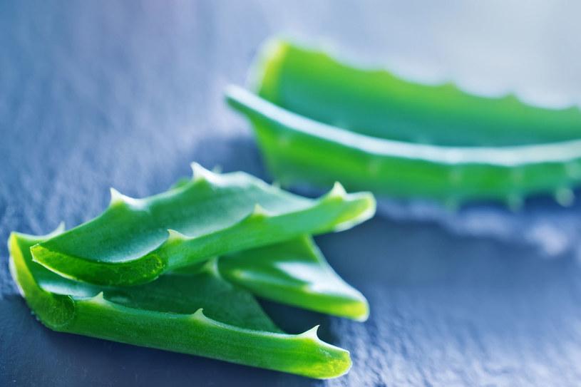Aloes jest bardziej odporny na suszę niż kaktus. Pomyśl więc, ile w nim drogocennej wilgoci dla ciała! /123RF/PICSEL