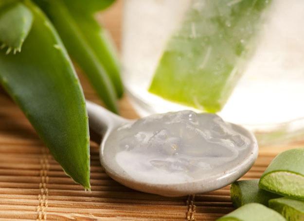 Aloes jest doceniany – zarówno w medycynie, jak i kosmetologii /INTERIA.PL