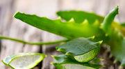 Aloes nawilży i ukoi cerę