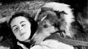 Amerykańska pisarka apeluje o przyznawanie Oscarów grającym w filmach psom