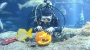 Amerykańskie oceanarium gotowe na Halloween