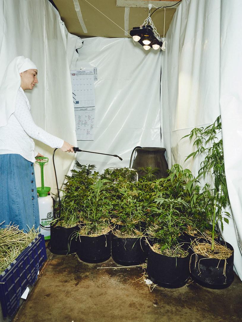 """Amerykańskie zakonnice, tzw. """"Siostry z Doliny"""" zajmują się produkcją leczniczej marihuany / Fot. Shaughn Crawford/John Dubois /"""