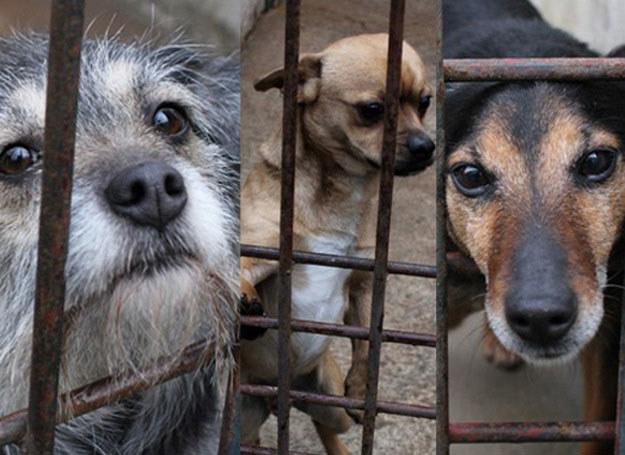 Bezdomne psy czekają na pomoc w Krakowskim Schronisku dla Bezdomnych Zwierząt /INTERIA.PL