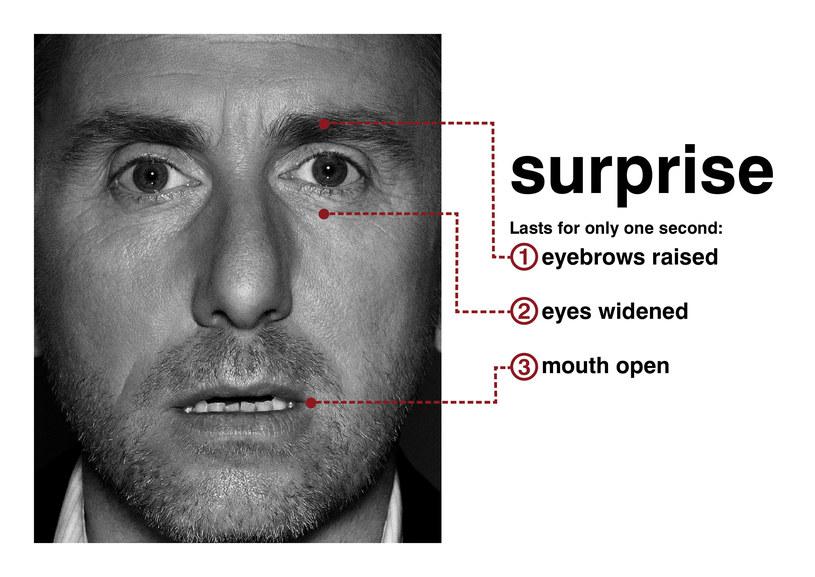 Czytanie z twarzy Tima Rotha /materiały prasowe