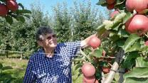"""""""Interwencja"""". Bez pieniędzy za jabłka. Rolnicy tracą cierpliwość"""