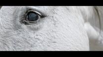 """""""Zwierzostan"""": Pierwszy taki serial przyrodniczo-dokumentalny"""
