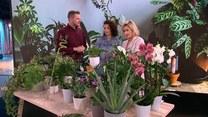 Anna Wojtala i rośliny dobre na wszystko